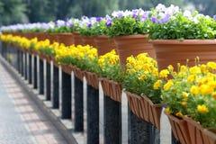 Dekoracyjni kwiaty w koszach wzdłuż marmurowego parapet Obrazy Royalty Free