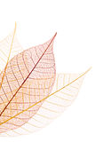 dekoracyjni liść Zdjęcie Royalty Free