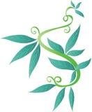 dekoracyjni liście Zdjęcia Stock