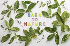 Dekoracyjni listy tworzy słowa ` z powrotem natury ` Fotografia Royalty Free