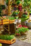 Dekoracyjni roślina krzaków drzewa i kwiaty Zdjęcia Stock
