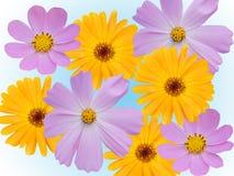 dekoracyjni rumianków kwiaty Zdjęcia Royalty Free