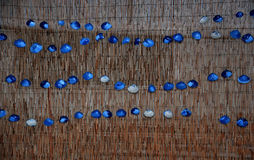 Dekoracyjni seashells zdjęcie stock