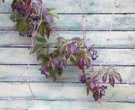dekoracyjni winogrona Zdjęcie Stock