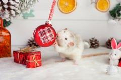 Dekoracyjny śliczny szczur na tle Bożenarodzeniowe dekoracje Zdjęcia Royalty Free