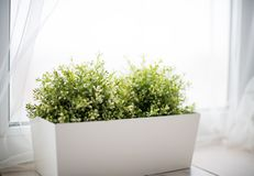 Dekoracyjny Bush zielona trawa w stojaku w bardzo jaskrawym roo obrazy stock