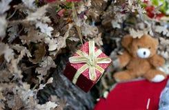 Dekoracyjny czerwony mały prezent jako ornament na dębowej choince, Zdjęcia Stock
