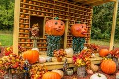Dekoracyjny dyniowy pokaz w jesieni fotografia stock