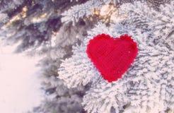 Dekoracyjny dziewiarski serce na jedliny gałąź Zima wakacji pojęcie Miłości pojęcia tło Luty 14 Tekstylny czerwony serce dalej Obrazy Royalty Free