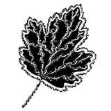 Dekoracyjny gronowy liść Obrazy Royalty Free