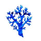 Dekoracyjny koral Obrazy Royalty Free