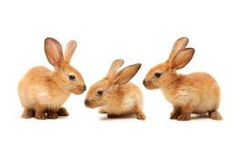 dekoracyjny królik zdjęcia royalty free