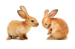 dekoracyjny królik zdjęcia stock