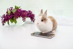 Dekoracyjny królik z złocistym smartphone tła bukietem bzy fotografia stock