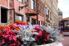 dekoracyjny kwiatów Petersburg st Obrazy Royalty Free