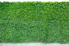 Dekoracyjny ogród na ceglanej podłoga i ogrodzeniu Fotografia Stock