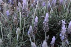 Dekoracyjny ogród z roślinami obrazy royalty free