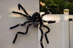 Dekoracyjny pająk fotografia royalty free