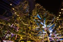 Dekoracyjny plenerowy sznurek zaświeca obwieszenie na drzewie w ogródzie przy nighttime obrazy royalty free