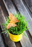 Dekoracyjny pomarańczowy motyl na świeżej zielonej trawie Zdjęcia Stock