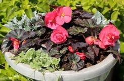 dekoracyjny przygotowania kwiat Zdjęcie Stock