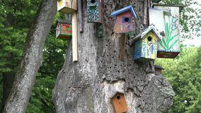 Dekoracyjny ptak gniazduje pudełka wiesza starego nieżywego drzewnego bagażnika w parku 4K zdjęcie wideo