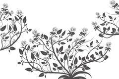 Dekoracyjny róży rośliny sylwetki bielu tło obrazy royalty free