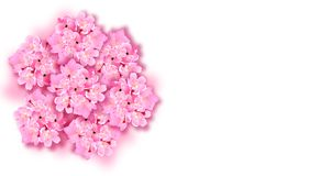 Dekoracyjny Sakura kwitnie, bukiet, projektów elementy Może używać dla kart, zaproszenia, sztandary, plakaty, druku projekt ilustracji