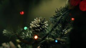 Dekoracyjny sosna rożek na gałąź choinka zbiory wideo