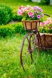 Dekoracyjny Stary bicykl Wyposażający rocznika modela Koszykowych kwiatów ogród Fotografia Royalty Free