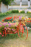 Dekoracyjny Stary bicykl Wyposażający rocznika modela Koszykowych kwiatów ogród fotografia Fotografia Stock