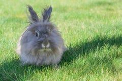 Dekoracyjny szary królik Zdjęcia Royalty Free