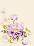 Dekoracyjny tło z peonia kwiatami Fotografia Royalty Free