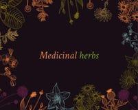 Dekoracyjny tło z roczników leczniczymi ziele kreśli ramę royalty ilustracja