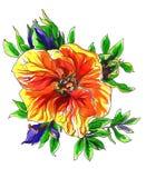 Dekoracyjny tropikalny egzotyczny mangowy kwiat ilustracji