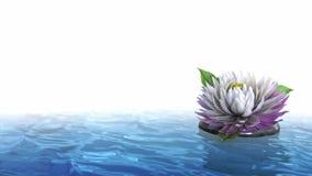 Dekoracyjny wakacyjny tło kwiat na wodzie obrazy royalty free