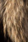 Dekoracyjny zwierzęcy futerko jako tło obraz stock