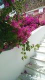 Dekoration auf der Straße: blühende helle rosa Blumen kaskadieren vom Baum durch die Treppe unten fallen vertikal Stockbilder