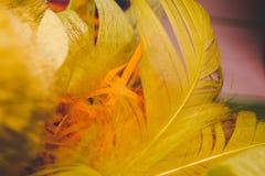 Dekoration mit gelben Federn Stockfotografie
