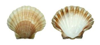 Dekoration: Shell lizenzfreies stockfoto