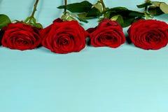 Dekoration von schönen roten Rosen auf einem blauen Hintergrund Lizenzfreie Stockfotografie