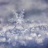 Dekorativ blå snöflinga på Sunny Day royaltyfria bilder