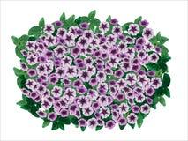 Dekorativ blomkruka för petunia Arkivfoto