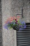 Dekorativ blomkruka med blåa och röda blommor på väggen royaltyfri foto