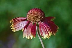 dekorativ blomma Arkivfoto