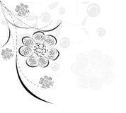 dekorativ blomma för bakgrundsbeautifull Royaltyfria Foton