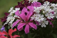 dekorativ blomma för ordning Arkivfoto