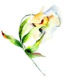 dekorativ blommawhite Arkivfoton