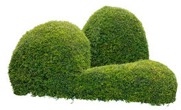 Dekorativ buske arkivfoto