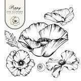 dekorativ elementset Handen drog vektorfärgpulverillustrationen av vallmo blommar vektor illustrationer